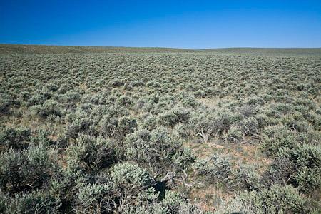 Sagebrush-steppe habitat near Malheur National Wildlife Refuge,