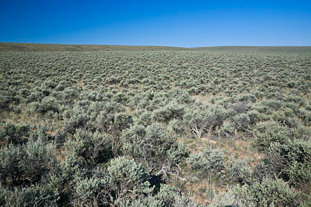 Sagebrush-steppe habitat near Malheur National Wildlife Refuge,