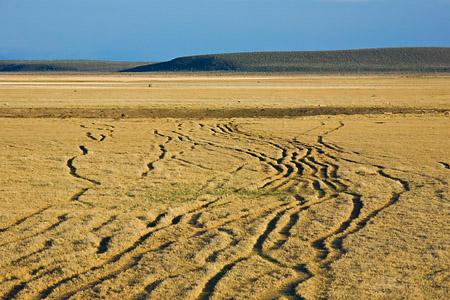 Cattle trails on range near Burns, Oregon