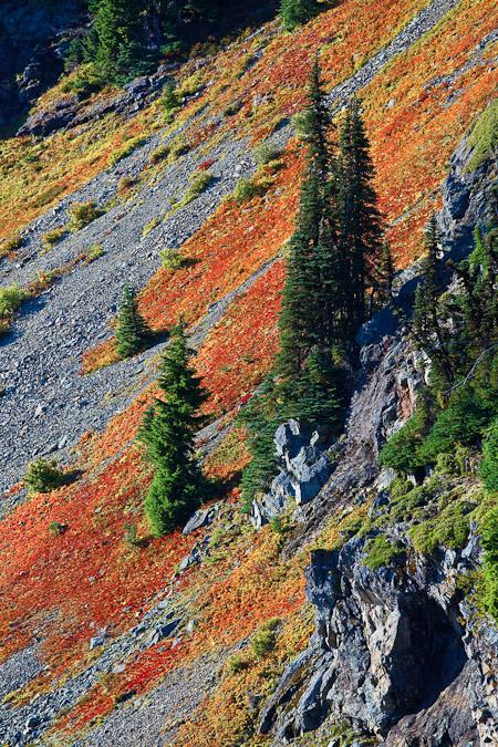 Cascades Blueberry in Mt. Baker Wilderness