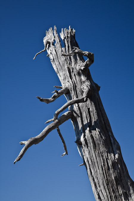 Snag of a fire-killed conifer on Yellow Aster Butte