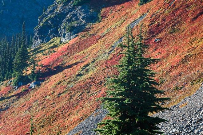 Brilliant Cascades Blueberry in Mt. Baker Wilderness