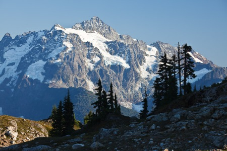 Mt. Shuksan with subalpine forest in foreground
