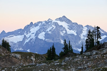 Mt. Shuksan with hemlock silhouettes