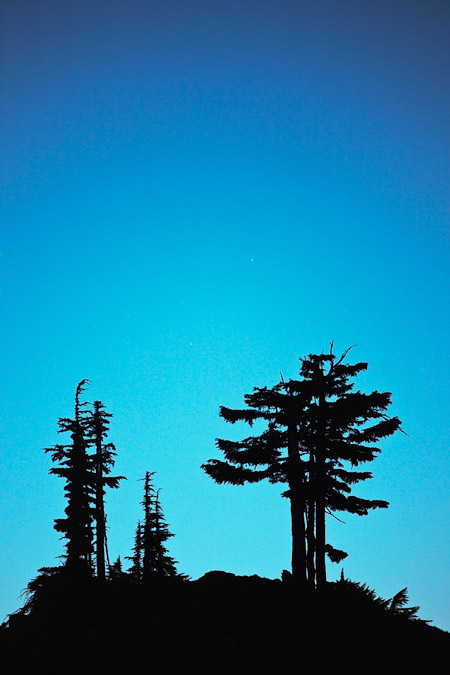Mountain Hemlocks  Mt. Baker Wilderness against a twilight sky
