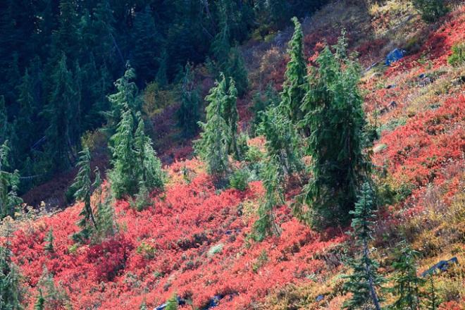 Mt_Rainier_October-313