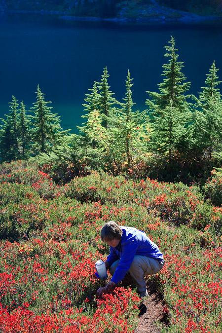 Betty Renkor Picking Cascades Blueberries