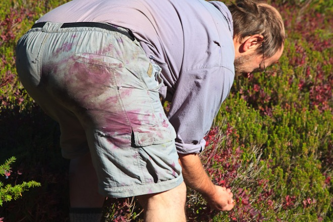 Blueberry-stained shorts