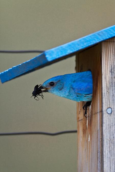 Bluebird House Plans Audubon Plans Diy How To Make Mute98mnq