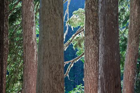 Glacier view meadows fire information - Mount Rainier National Park Gobblers Knob Fire Lookout
