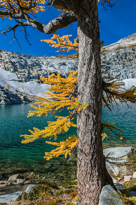 Autumn Alpine Larch along Inspiration Lake in The Enchantments