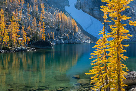 Alpine Larches along Leprechaun Lake in The Enchantments