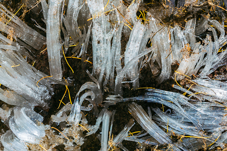 Needle Ice Pushing Up Through Soil in The Enchantments