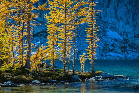 Autumn Alpine Larches Glowing along Perfection Lake in The Encha