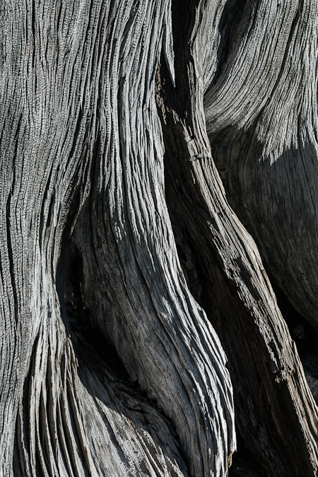 Weathered Wood of an Old, Dead Tree in The Enchantments