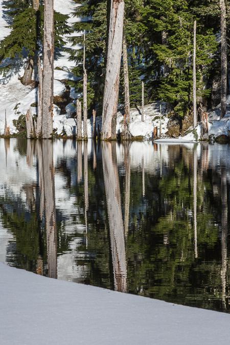 Dead Trees along Shore of June Lake at Mount St. Helens