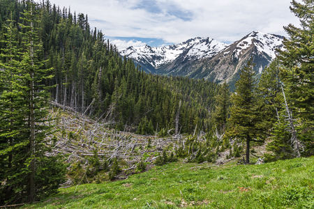 Massive Avalanche Path in Olympic National Forest