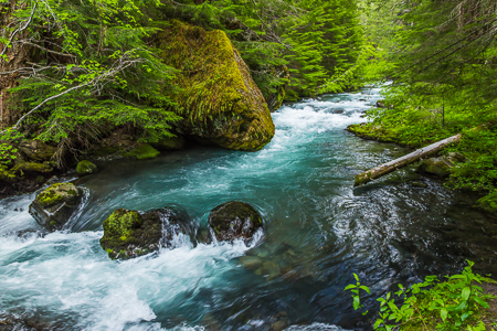 Dungeness River in Olympic National Forest