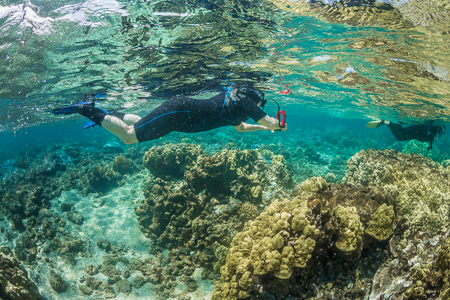Snorkelers and Coral Reef off Big Island of Hawaii