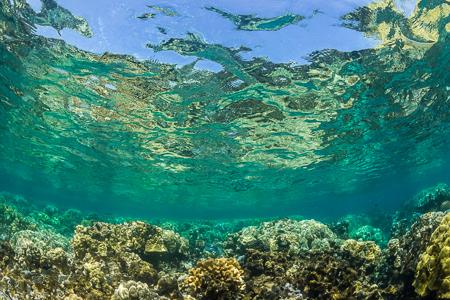 Corals in the Kapoho Tide Pools off Big Island of Hawaii