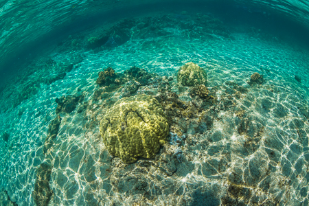 Coral and Reef Bottom in Kapoho Tide Pools off Big Island of Haw