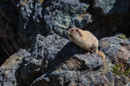 Marmot_Pass-234