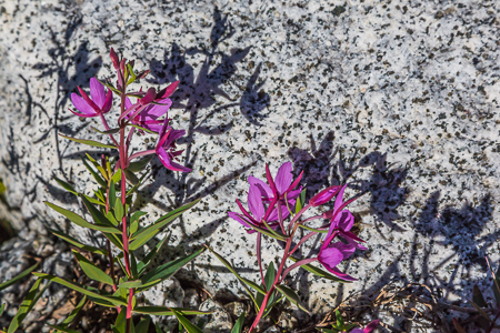 The_Enchantments_Summer-109