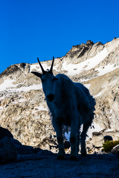 The_Enchantments_Summer-320