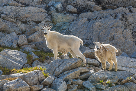 The_Enchantments_Summer-674