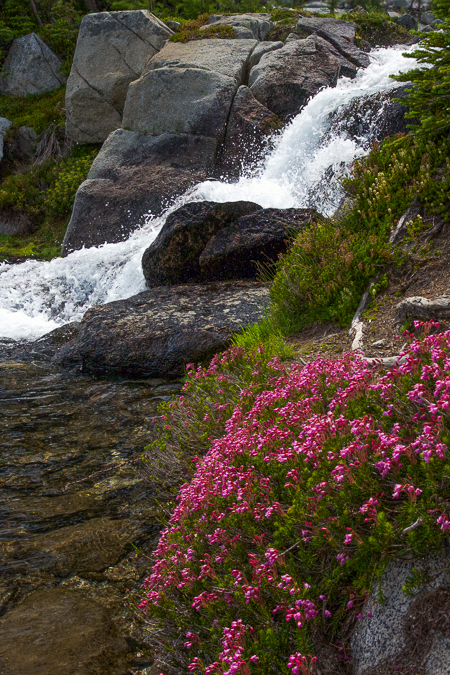 Heather_and_Stream-1