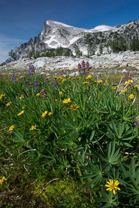 Little_Annapurna_Flowers-2