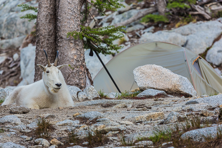 The_Enchantments_Summer-1172