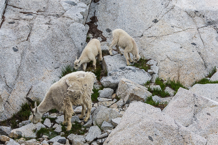 The_Enchantments_Summer-1221