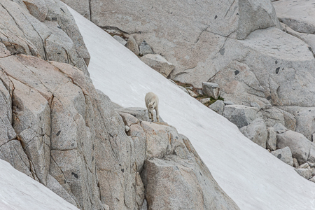 The_Enchantments_Summer-1263