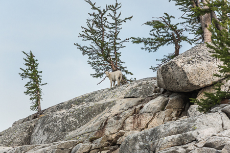 The_Enchantments_Summer-1294