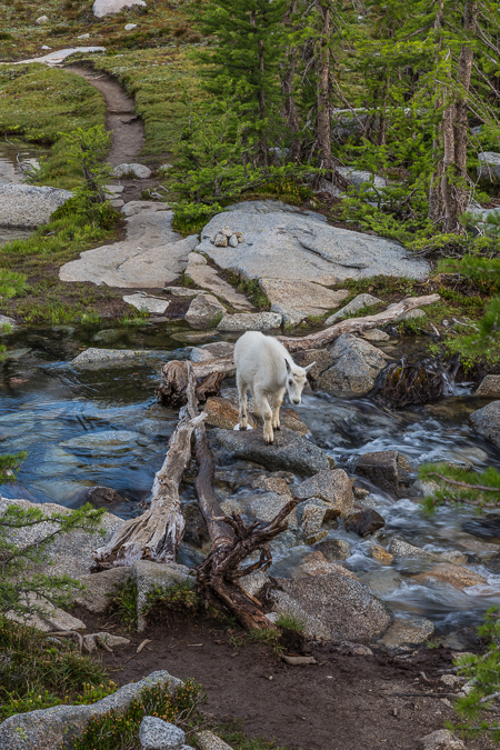 The_Enchantments_Summer-1302