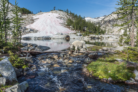 The_Enchantments_Summer-1320