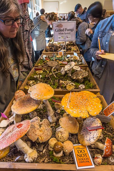 Seattle_Mushroom_Show-31