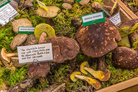 Seattle_Mushroom_Show-35