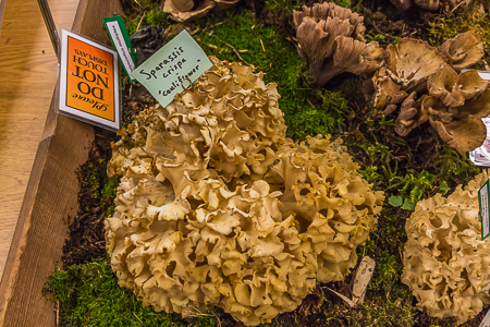 Seattle_Mushroom_Show-40