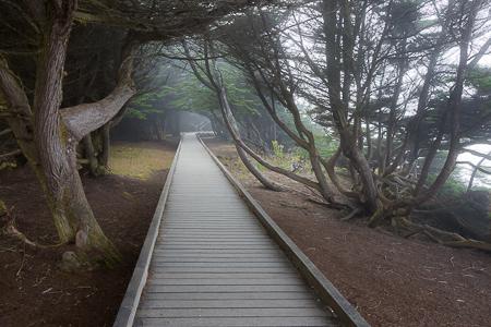 Boardwalk through Forest on Laguna Point  of MacKerricher State