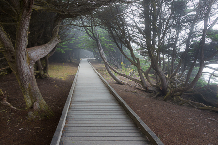 Boardwalk through Forest on Laguna Point  of MacKerricher State