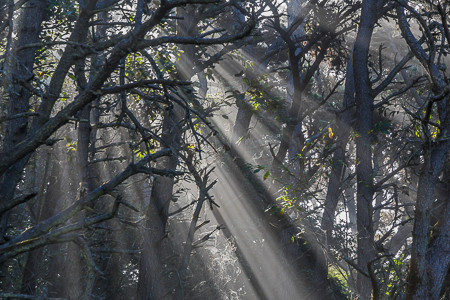 Godbeams from Pacific Ocean Fog in MacKerricher State Park