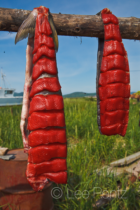 Air drying Sockeye Salmon
