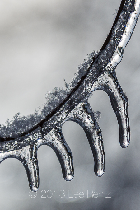 Twigs Coated with Ice From Freezing Rain