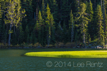 Swamp Horsetail Massed along Lake Stuart in The Enchantments