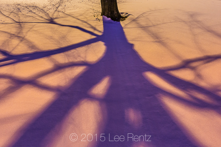 Tree Shadows Crossing a Snowy Winter Landscape in Michigan