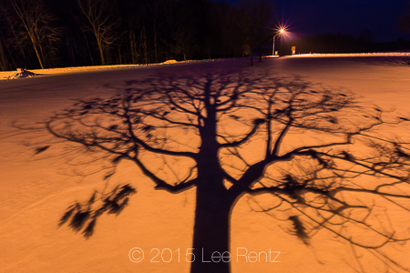 Tree Shadows Crossing a Snowy Winter Landscape in Michigan