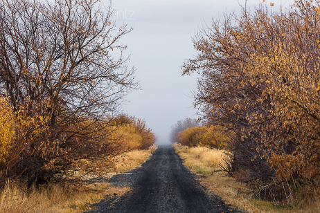 Foggy Autum Morning along Central Patrol Road in Malheur Nationa