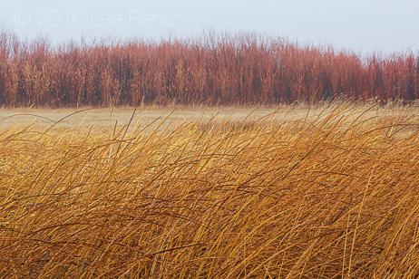 Autumn Textures in Malheur National Wildlife Refuge